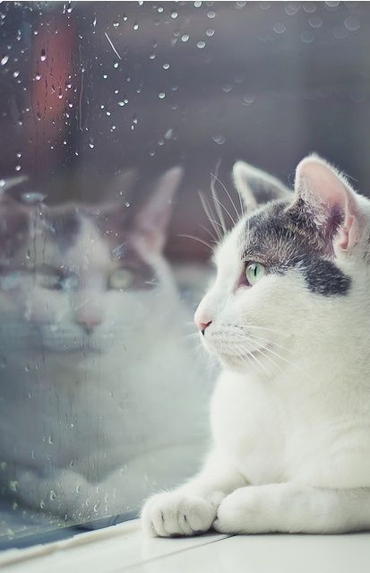 cat by rainy window