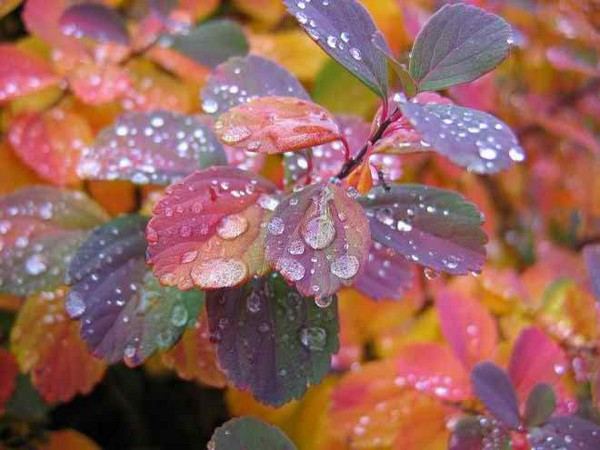 rain on colorful leaves pretty